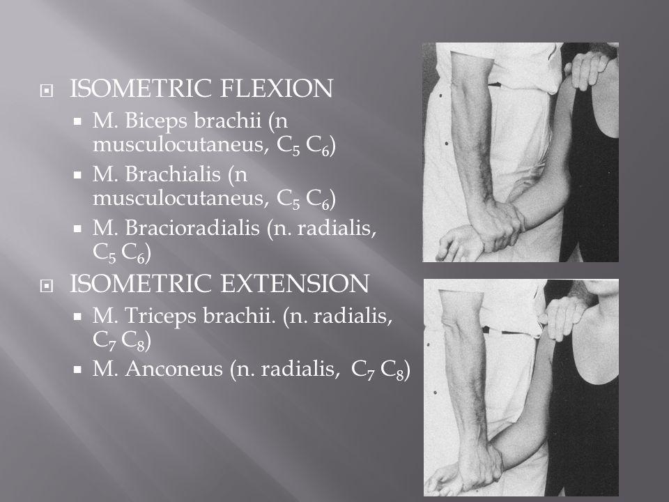  ISOMETRIC FLEXION  M. Biceps brachii (n musculocutaneus, C 5 C 6 )  M. Brachialis (n musculocutaneus, C 5 C 6 )  M. Bracioradialis (n. radialis,