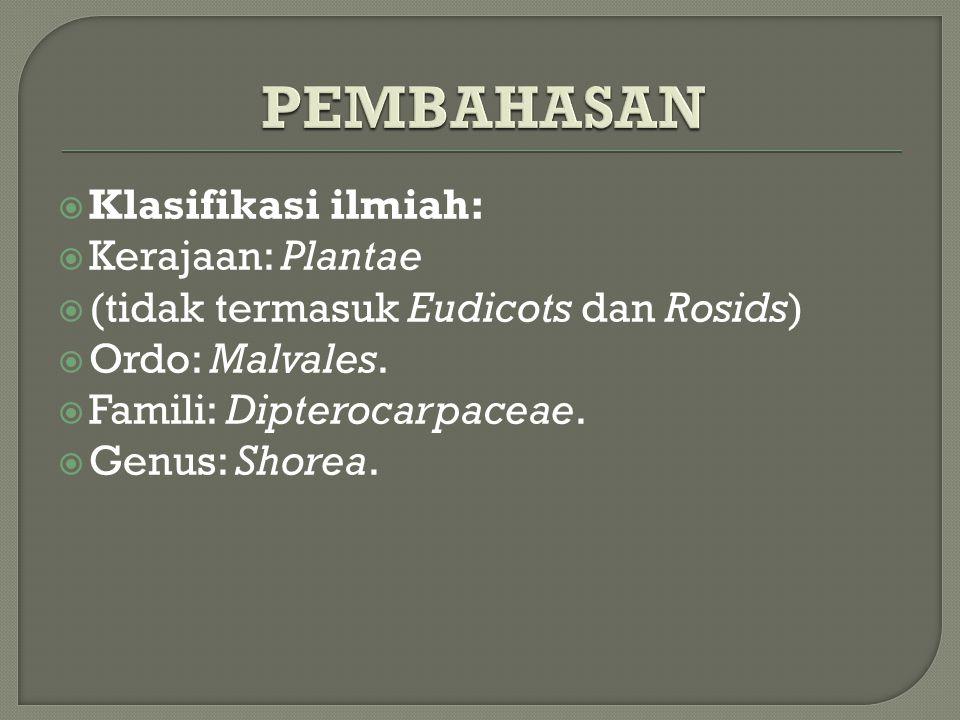  Klasifikasi ilmiah:  Kerajaan: Plantae  (tidak termasuk Eudicots dan Rosids)  Ordo: Malvales.