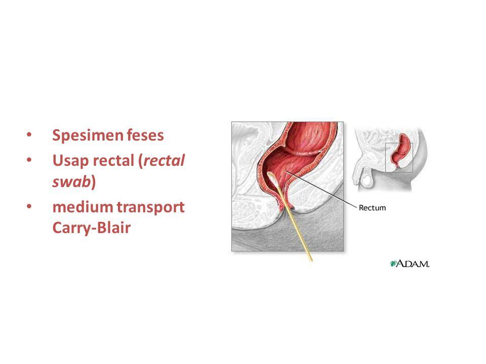SPESIMEN SALURAN CERNA Spesimen feses Usap rectal (rectal swab) medium transport Carry-Blair