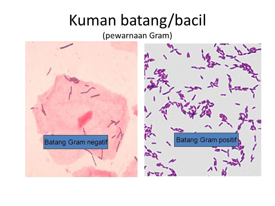 Kuman batang/bacil (pewarnaan Gram) Batang Gram negatif Batang Gram positif