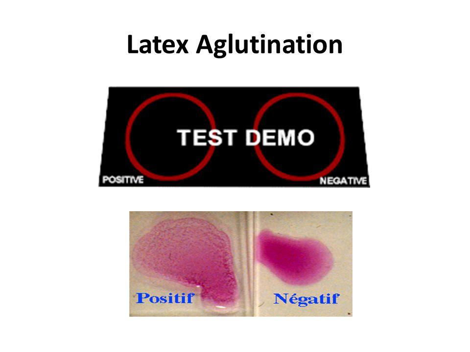 Latex Aglutination