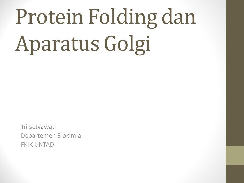 Protein Folding dan Aparatus Golgi Tri setyawati Departemen Biokimia FKIK UNTAD