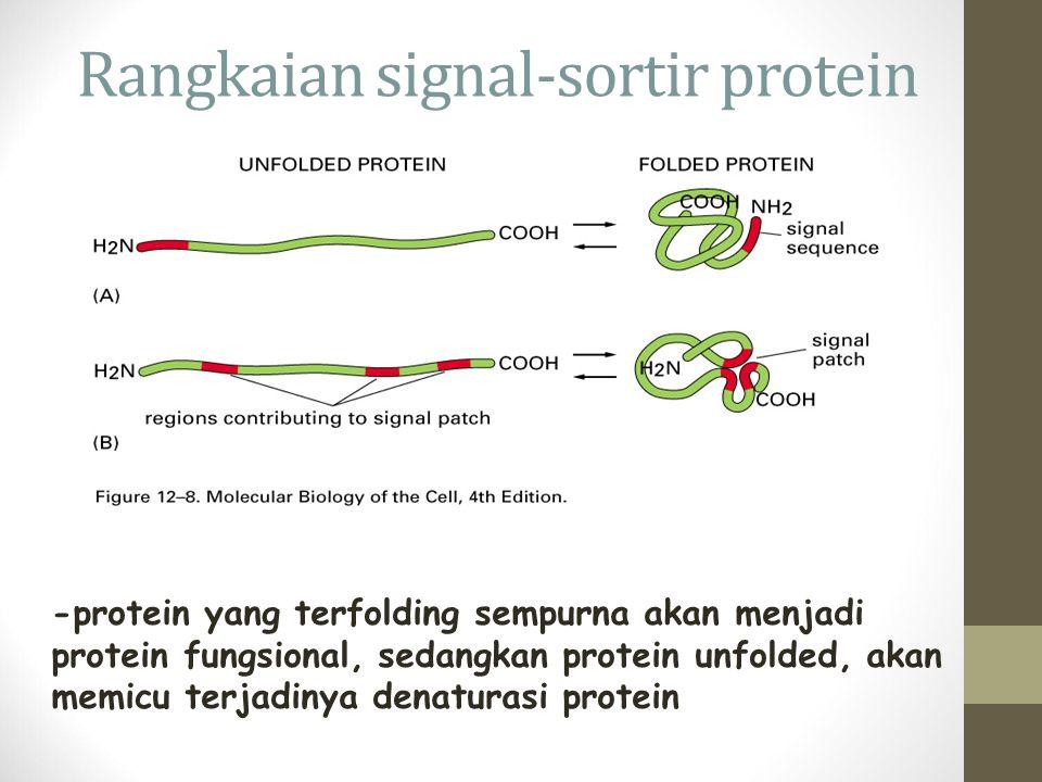 Rangkaian signal-sortir protein -protein yang terfolding sempurna akan menjadi protein fungsional, sedangkan protein unfolded, akan memicu terjadinya denaturasi protein