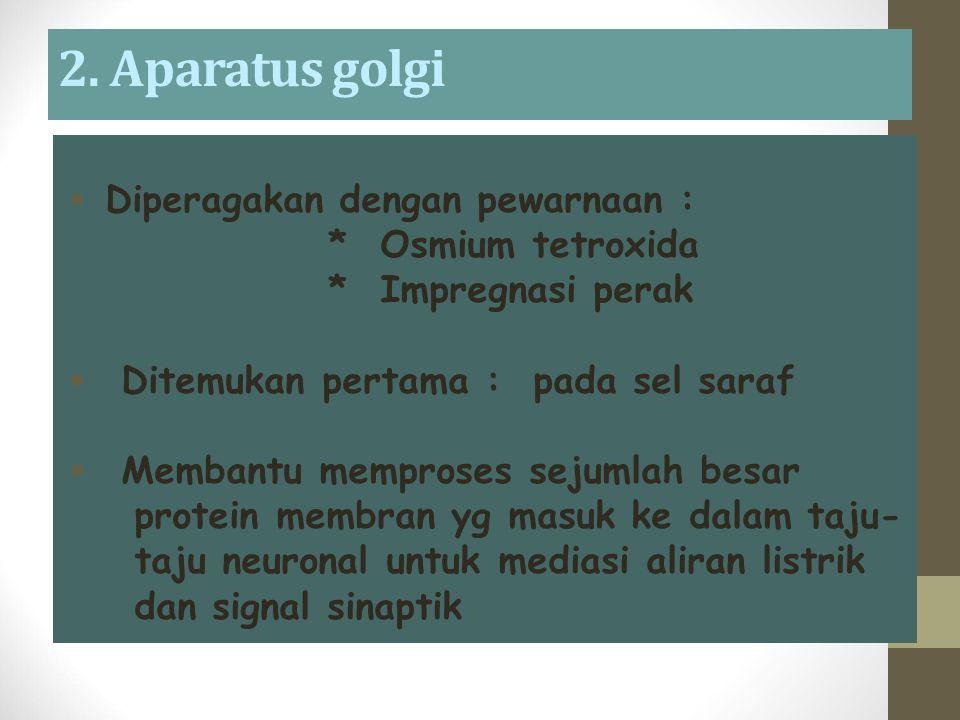  Diperagakan dengan pewarnaan : * Osmium tetroxida * Impregnasi perak  Ditemukan pertama : pada sel saraf  Membantu memproses sejumlah besar protein membran yg masuk ke dalam taju- taju neuronal untuk mediasi aliran listrik dan signal sinaptik 2.