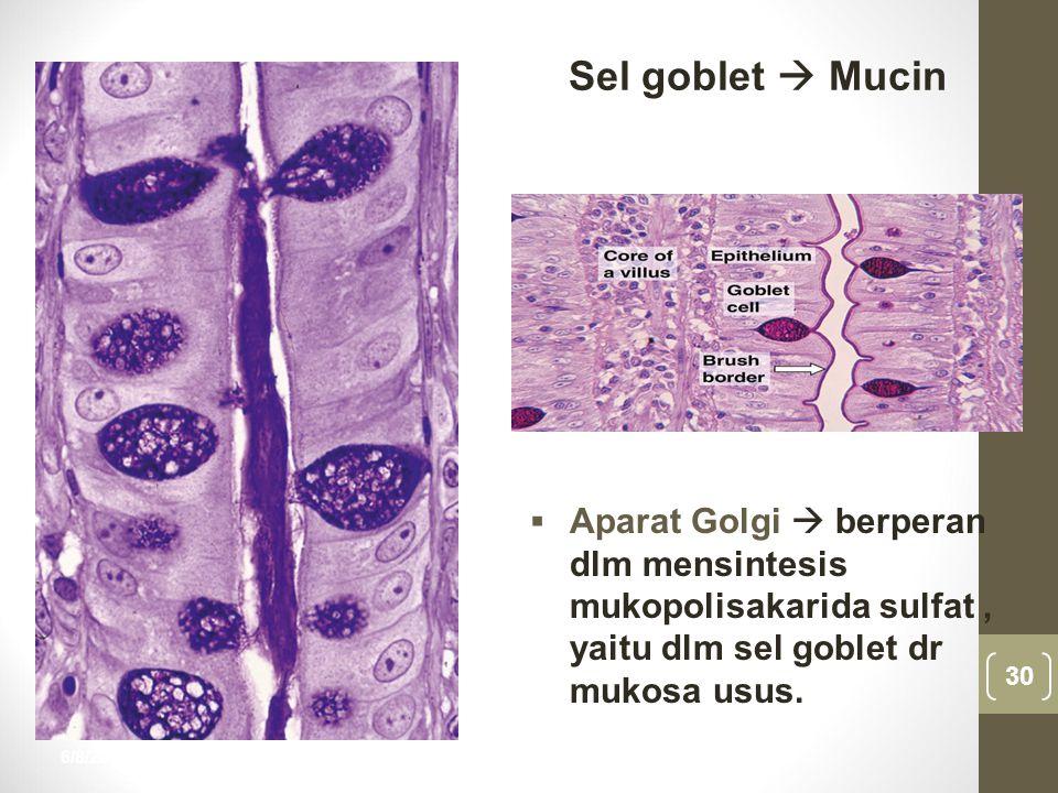 6/8/2015 30 nur anisah  Aparat Golgi  berperan dlm mensintesis mukopolisakarida sulfat, yaitu dlm sel goblet dr mukosa usus. Sel goblet  Mucin