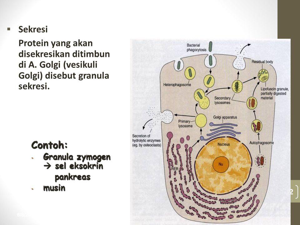 6/8/2015 32 nur anisah  Sekresi Protein yang akan disekresikan ditimbun di A. Golgi (vesikuli Golgi) disebut granula sekresi. Contoh: - Granula zymog