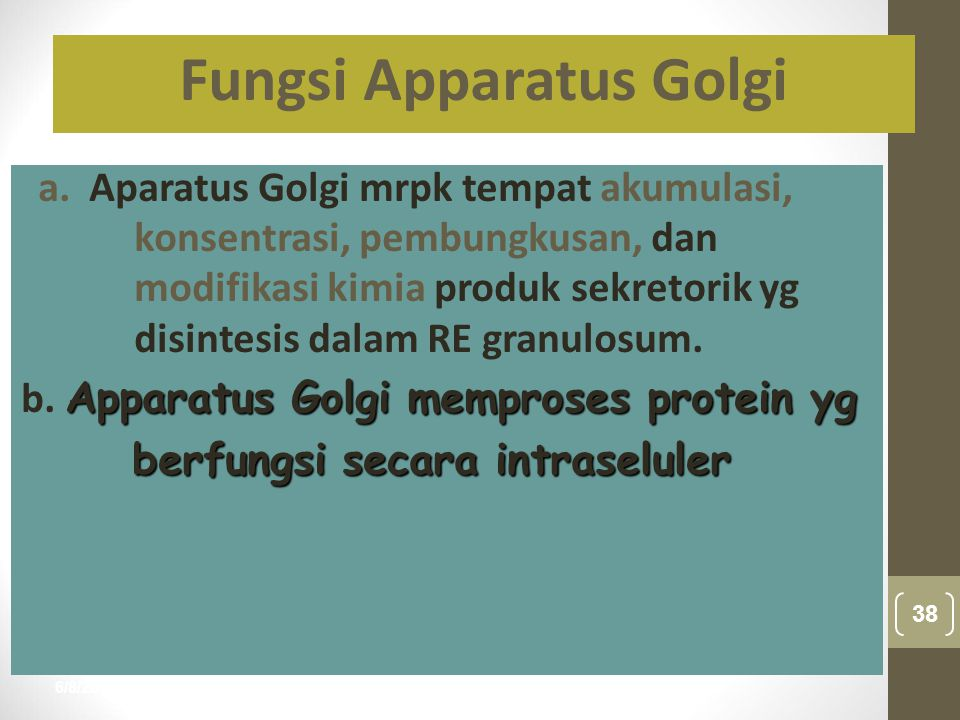6/8/2015 38 nur anisah a. Aparatus Golgi mrpk tempat akumulasi, konsentrasi, pembungkusan, dan modifikasi kimia produk sekretorik yg disintesis dalam