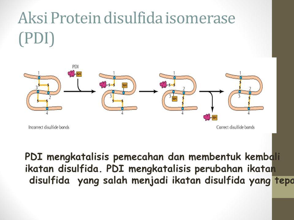 Aksi Protein disulfida isomerase (PDI) PDI mengkatalisis pemecahan dan membentuk kembali ikatan disulfida. PDI mengkatalisis perubahan ikatan disulfid