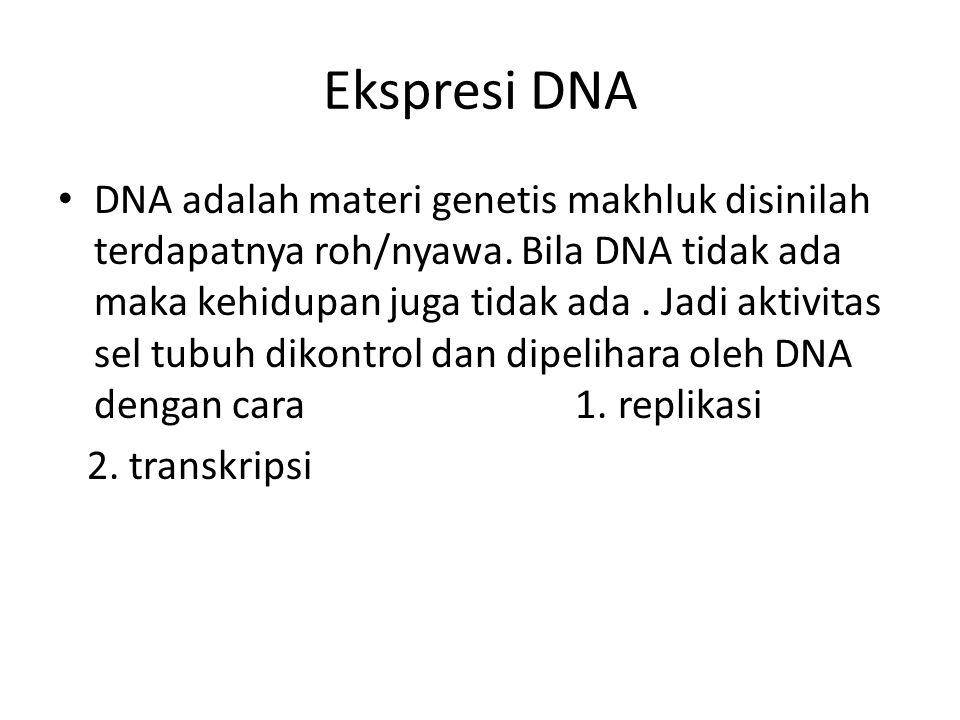 Ekspresi DNA DNA adalah materi genetis makhluk disinilah terdapatnya roh/nyawa. Bila DNA tidak ada maka kehidupan juga tidak ada. Jadi aktivitas sel t