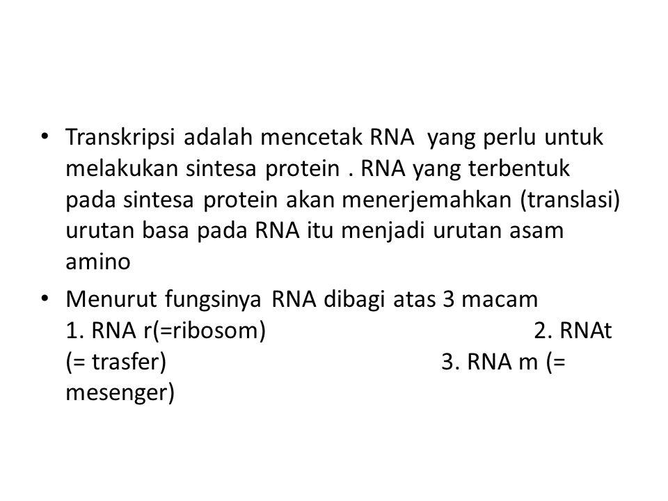 Transkripsi adalah mencetak RNA yang perlu untuk melakukan sintesa protein. RNA yang terbentuk pada sintesa protein akan menerjemahkan (translasi) uru