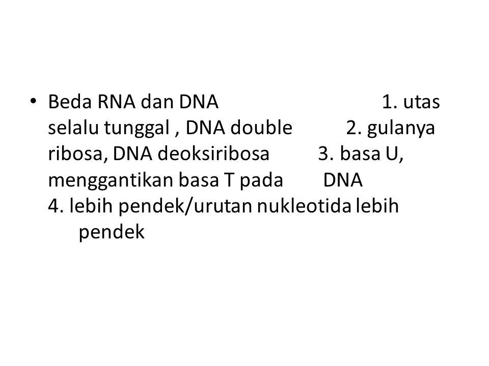 Beda RNA dan DNA 1. utas selalu tunggal, DNA double 2. gulanya ribosa, DNA deoksiribosa 3. basa U, menggantikan basa T pada DNA 4. lebih pendek/urutan