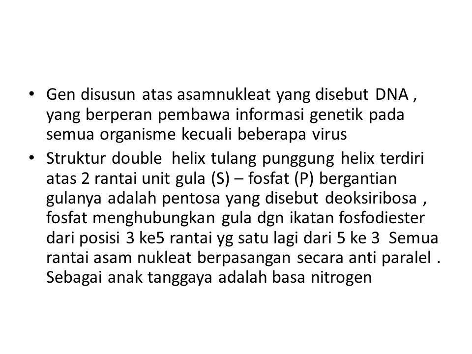 Gen disusun atas asamnukleat yang disebut DNA, yang berperan pembawa informasi genetik pada semua organisme kecuali beberapa virus Struktur double helix tulang punggung helix terdiri atas 2 rantai unit gula (S) – fosfat (P) bergantian gulanya adalah pentosa yang disebut deoksiribosa, fosfat menghubungkan gula dgn ikatan fosfodiester dari posisi 3 ke5 rantai yg satu lagi dari 5 ke 3 Semua rantai asam nukleat berpasangan secara anti paralel.