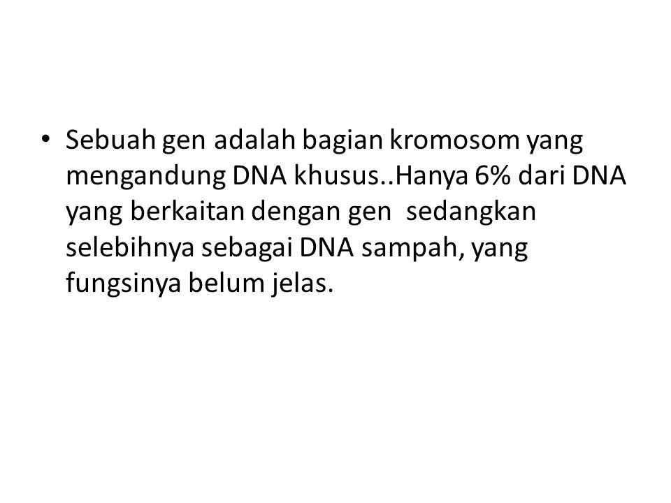 Sebuah gen adalah bagian kromosom yang mengandung DNA khusus..Hanya 6% dari DNA yang berkaitan dengan gen sedangkan selebihnya sebagai DNA sampah, yan