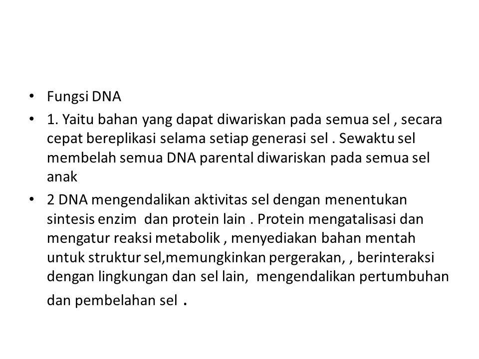 Fungsi DNA 1. Yaitu bahan yang dapat diwariskan pada semua sel, secara cepat bereplikasi selama setiap generasi sel. Sewaktu sel membelah semua DNA pa