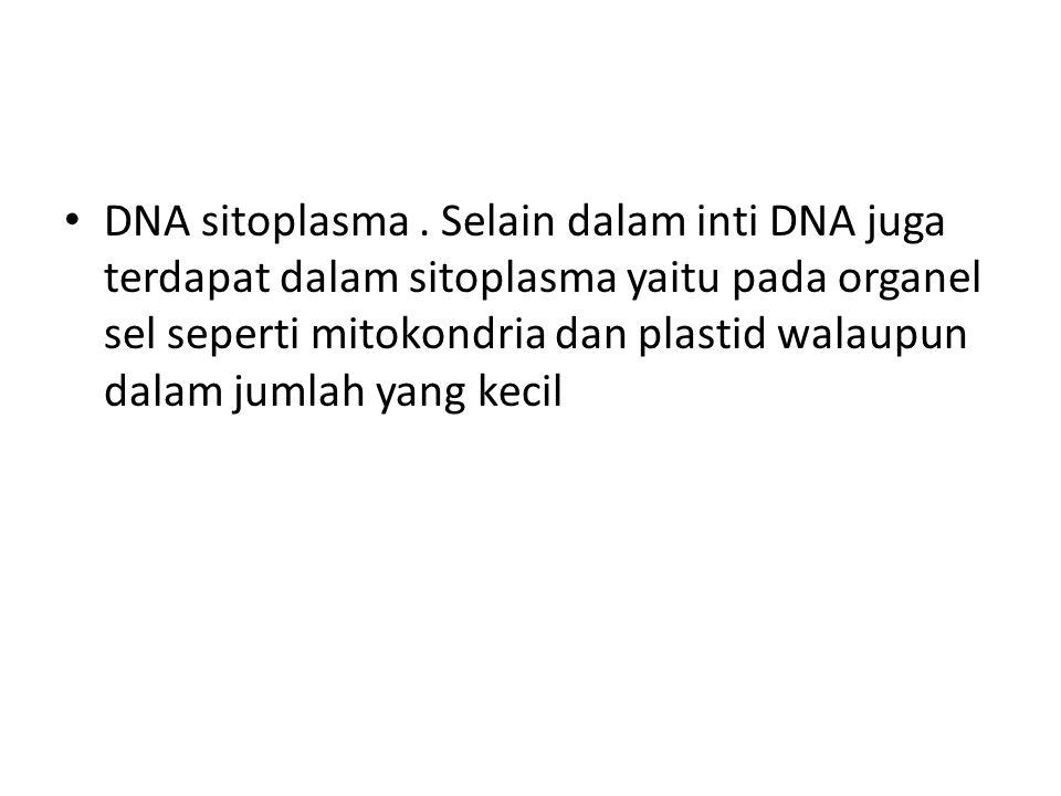 DNA sitoplasma. Selain dalam inti DNA juga terdapat dalam sitoplasma yaitu pada organel sel seperti mitokondria dan plastid walaupun dalam jumlah yang