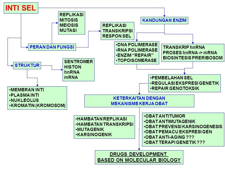 INTI SEL STRUKTUR PERAN DAN FUNGSI KANDUNGAN ENZIM KETERKAITAN DENGAN MEKANISME KERJA OBAT MEMBRAN INTI PLASMA INTI NUKLEOLUS KROMATIN (KROMOSOM) DNA POLIMERASE RNA POLIMERASE ENZIM REPAIR TOPOISOMERASE HAMBATAN REPLIKASI HAMBATAN TRANSKRIPSI MUTAGENIK KARSINOGENIK TRANSKRIP hnRNA PROSES hnRNA -> mRNA BIOSINTESIS PRERIBOSOM REPLIKASI MITOSIS MEIOSIS MUTASI PEMBELAHAN SEL REGULASI EKSPRESI GENETIK REPAIR GENOTOKSIK OBAT ANTITUMOR OBAT ANTIMUTAGENIK OBAT PREVENSI KARSINOGENESIS OBAT PEMACU EKSPRESI GEN OBAT ANTI-AGING ??.