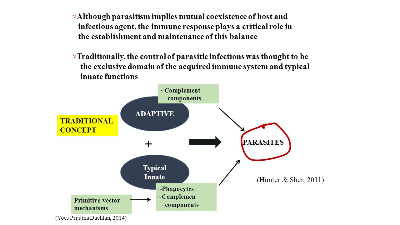 √Although parasitism implies mutual coexistence of host and infectious agent, the immune response plays a critical role in the establishment and maintenance of this balance √Traditionally, the control of parasitic infections was thought to be the exclusive domain of the acquired immune system and typical innate functions ADAPTIVE Typical Innate + PARASITES ~Phagocytes ~Complemen components ~Complement components TRADITIONAL CONCEPT Primitive vector mechanisms (Hunter & Sher, 2011) (Yoes Prijatna Dachlan, 2014)