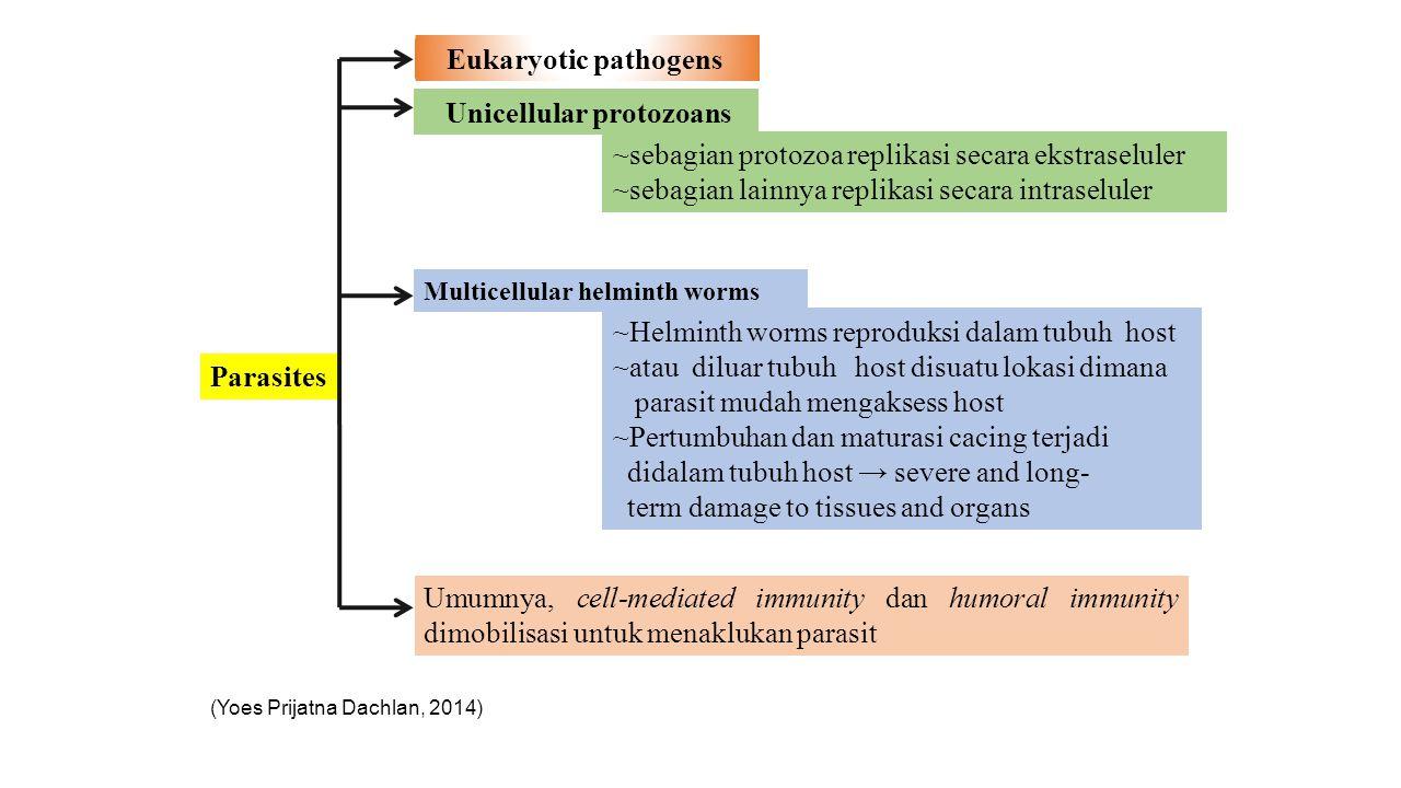 Parasites Unicellular protozoans ~sebagian protozoa replikasi secara ekstraseluler ~sebagian lainnya replikasi secara intraseluler ~Helminth worms rep