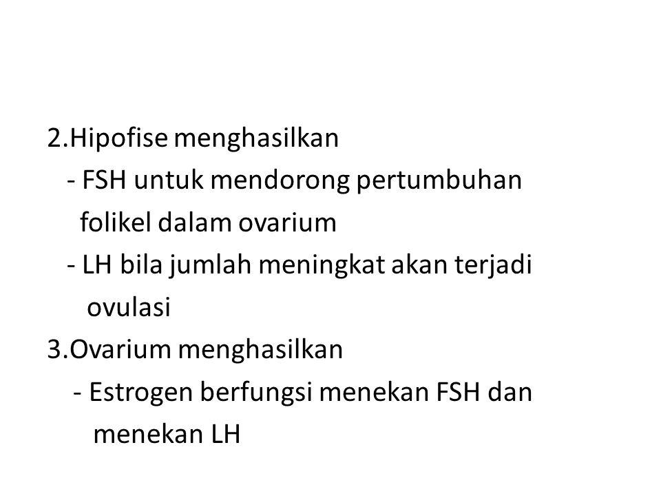2.Hipofise menghasilkan - FSH untuk mendorong pertumbuhan folikel dalam ovarium - LH bila jumlah meningkat akan terjadi ovulasi 3.Ovarium menghasilkan