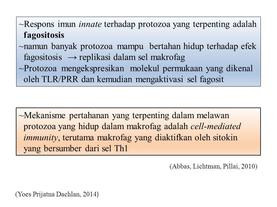 ~Respons imun innate terhadap protozoa yang terpenting adalah fagositosis ~namun banyak protozoa mampu bertahan hidup terhadap efek fagositosis → repl