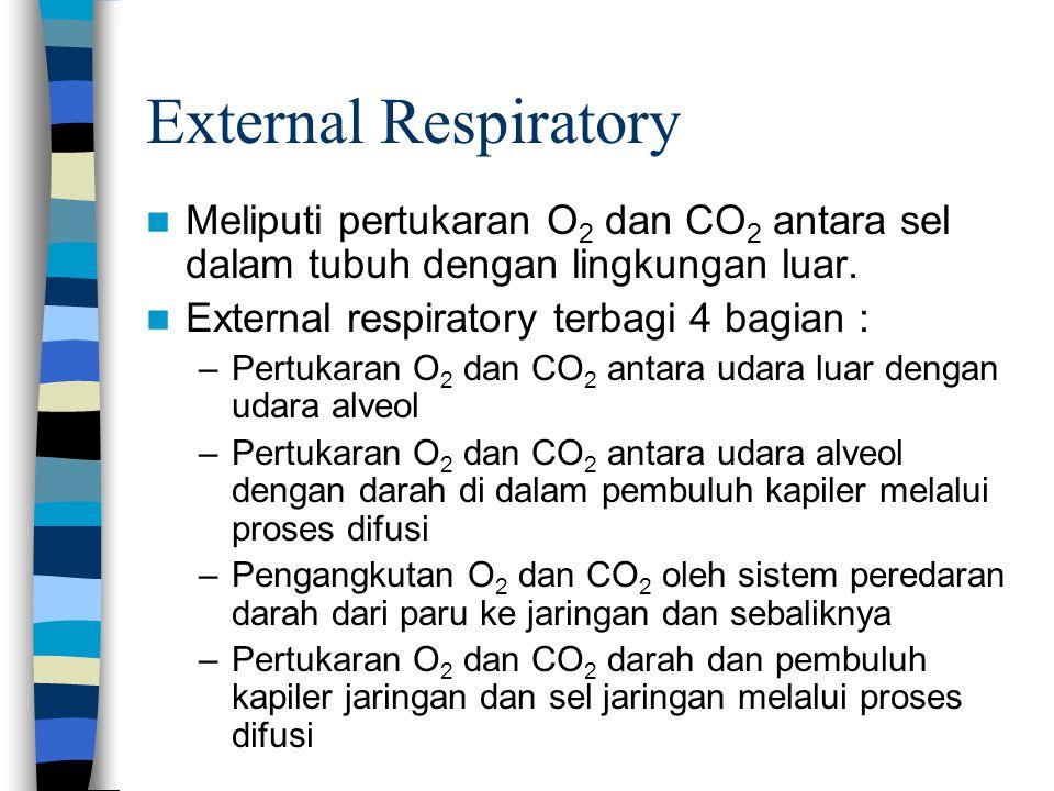 External Respiratory Meliputi pertukaran O 2 dan CO 2 antara sel dalam tubuh dengan lingkungan luar. External respiratory terbagi 4 bagian : –Pertukar