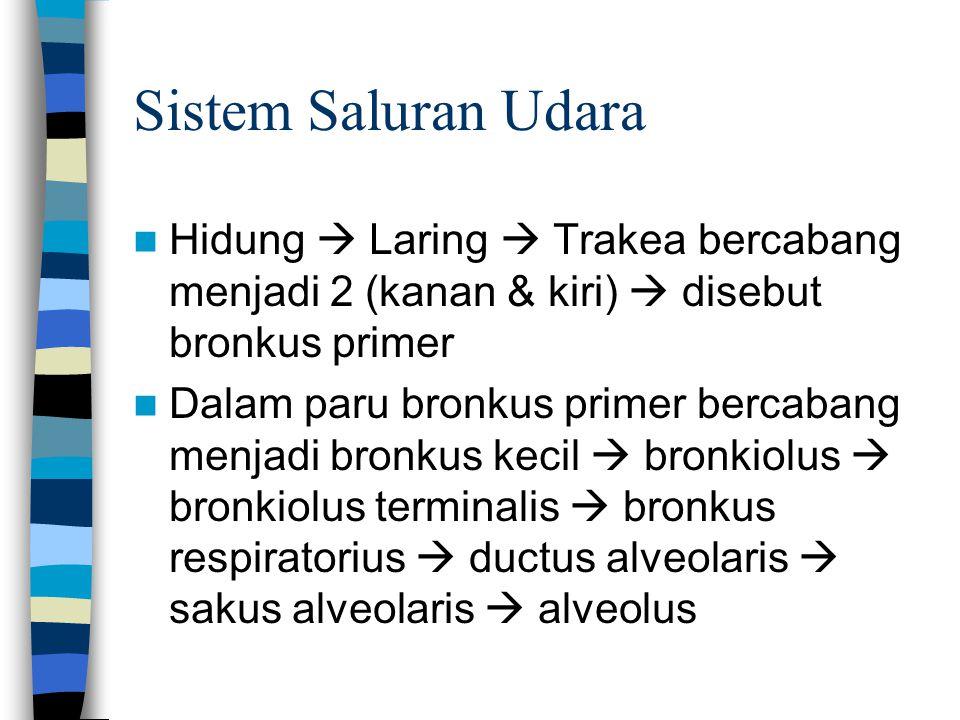 Sistem Saluran Udara Hidung  Laring  Trakea bercabang menjadi 2 (kanan & kiri)  disebut bronkus primer Dalam paru bronkus primer bercabang menjadi