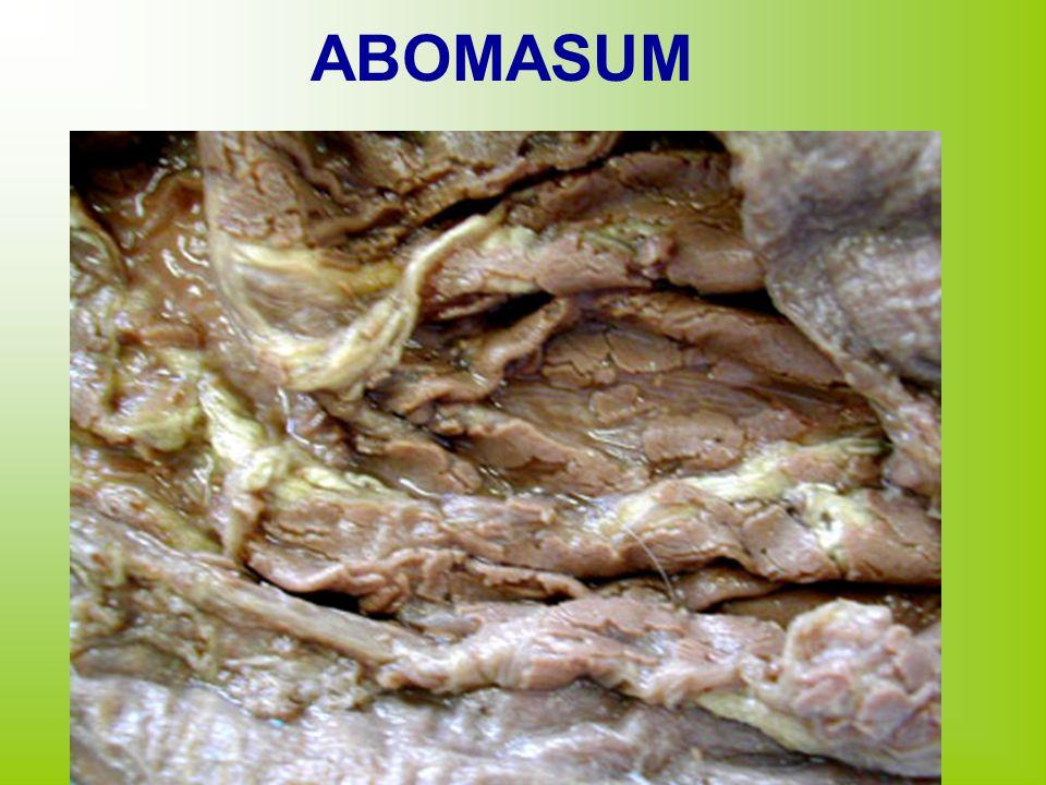 ABOMASUM