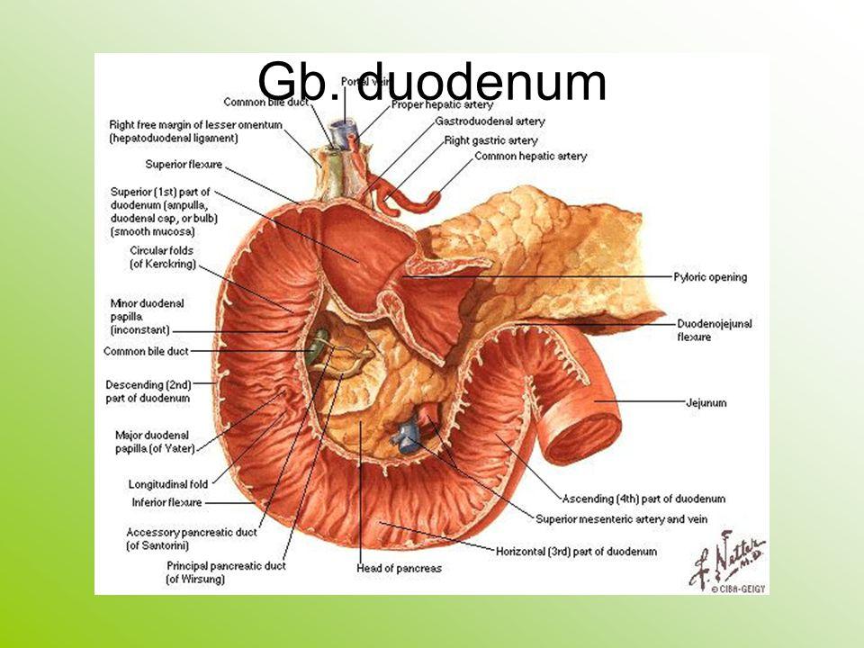 Gb. duodenum
