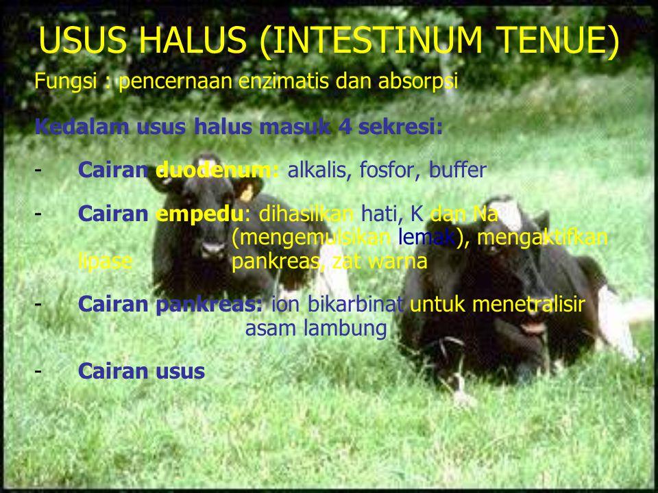 USUS HALUS (INTESTINUM TENUE) Fungsi : pencernaan enzimatis dan absorpsi Kedalam usus halus masuk 4 sekresi: -Cairan duodenum: alkalis, fosfor, buffer
