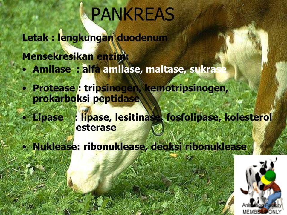PANKREAS Letak : lengkungan duodenum Mensekresikan enzim: Amilase : alfa amilase, maltase, sukrase Protease : tripsinogen, kemotripsinogen, prokarboks