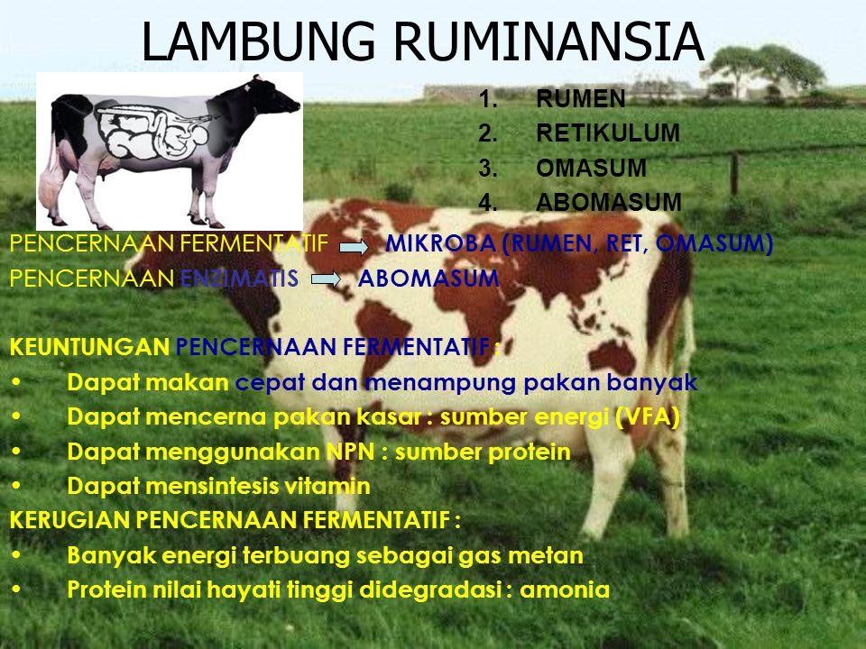 LAMBUNG RUMINANSIA 1.RUMEN 2.RETIKULUM 3.OMASUM 4.ABOMASUM PENCERNAAN FERMENTATIF MIKROBA (RUMEN, RET, OMASUM) PENCERNAAN ENZIMATIS ABOMASUM KEUNTUNGA