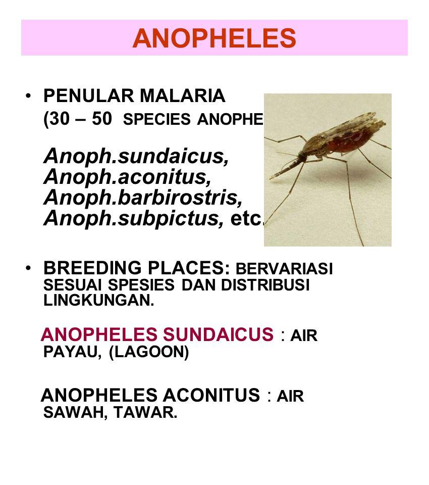 ANOPHELES PENULAR MALARIA (30 – 50 SPECIES ANOPHELES): Anoph.sundaicus, Anoph.aconitus, Anoph.barbirostris, Anoph.subpictus, etc. BREEDING PLACES: BER