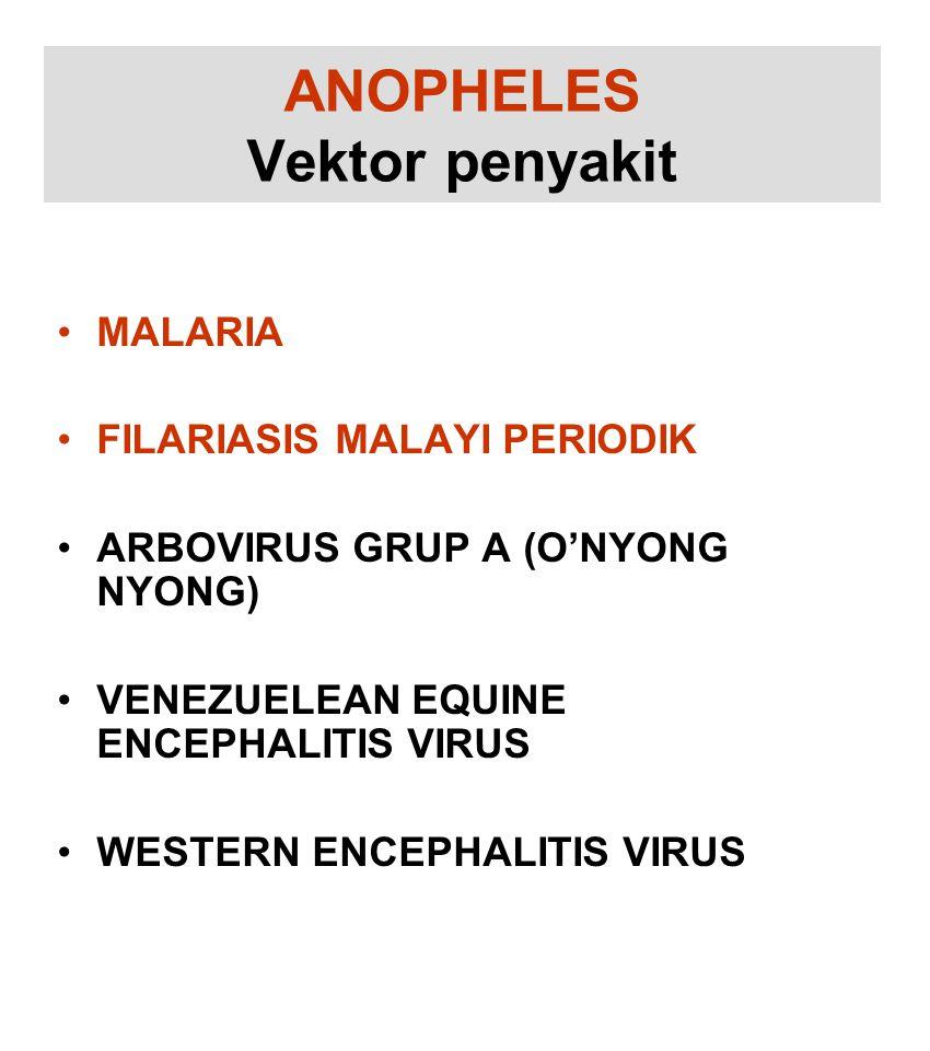 ANOPHELES Vektor penyakit MALARIA FILARIASIS MALAYI PERIODIK ARBOVIRUS GRUP A (O'NYONG NYONG) VENEZUELEAN EQUINE ENCEPHALITIS VIRUS WESTERN ENCEPHALITIS VIRUS