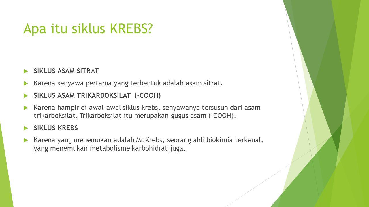 Siklus Krebs  Daur Krebs merupakan bagian rangkaian proses metabolisme yang panjang dan kompleks,yaitu oksidasi glukosa menjadi CO2,H2O dan produksi ATP.