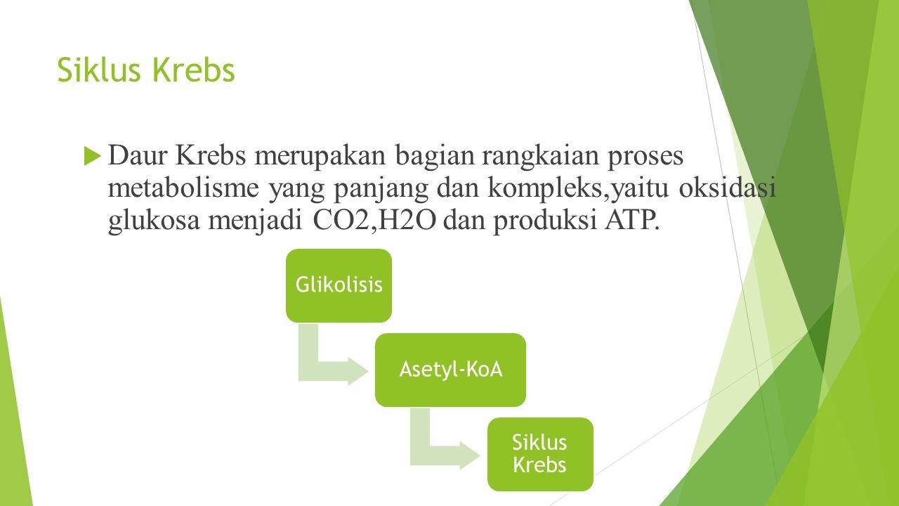 Siklus Krebs  Daur Krebs merupakan bagian rangkaian proses metabolisme yang panjang dan kompleks,yaitu oksidasi glukosa menjadi CO2,H2O dan produksi