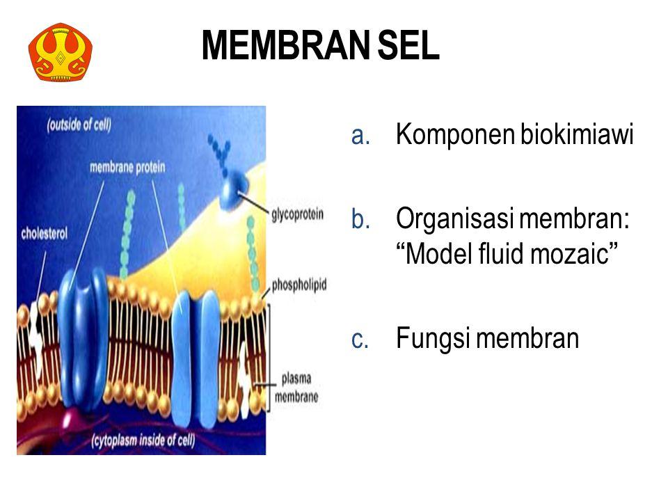 """MEMBRAN SEL a. Komponen biokimiawi b. Organisasi membran: """"Model fluid mozaic"""" c. Fungsi membran 13"""