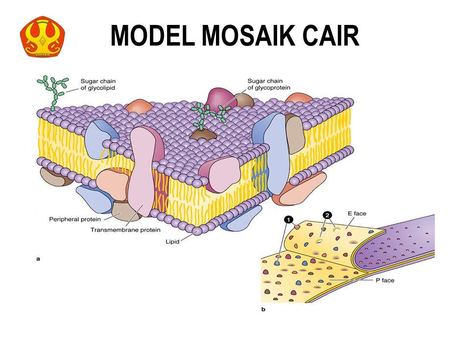 MODEL MOSAIK CAIR 14