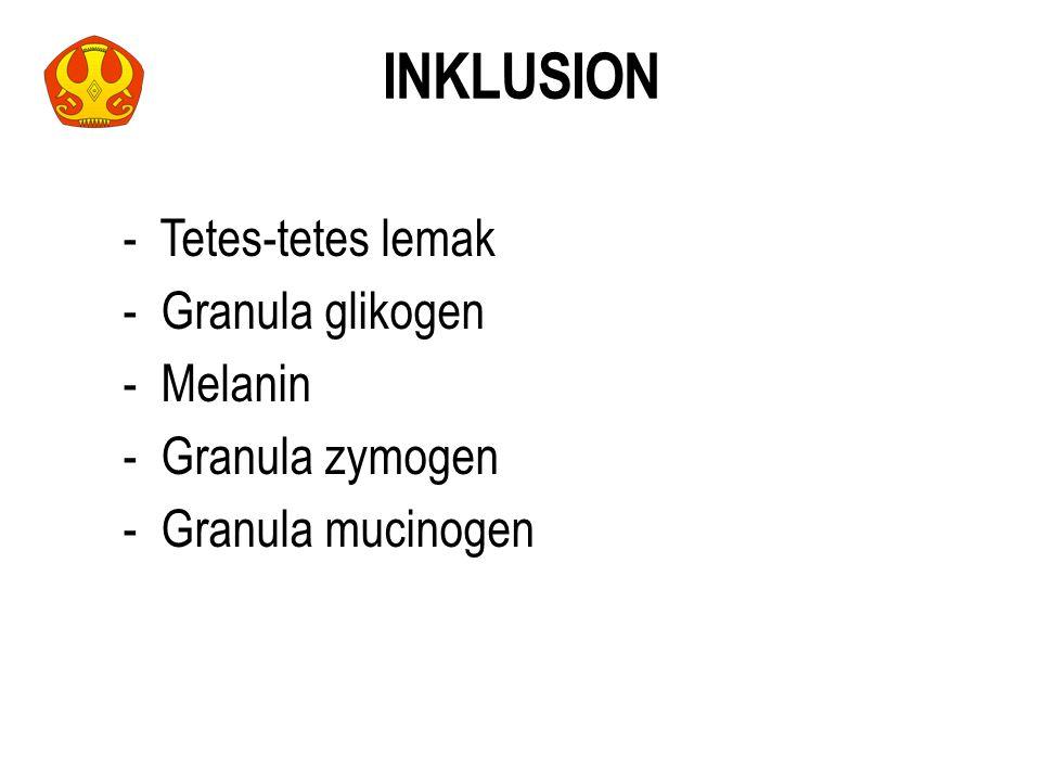- Tetes-tetes lemak - Granula glikogen - Melanin - Granula zymogen - Granula mucinogen INKLUSION 30