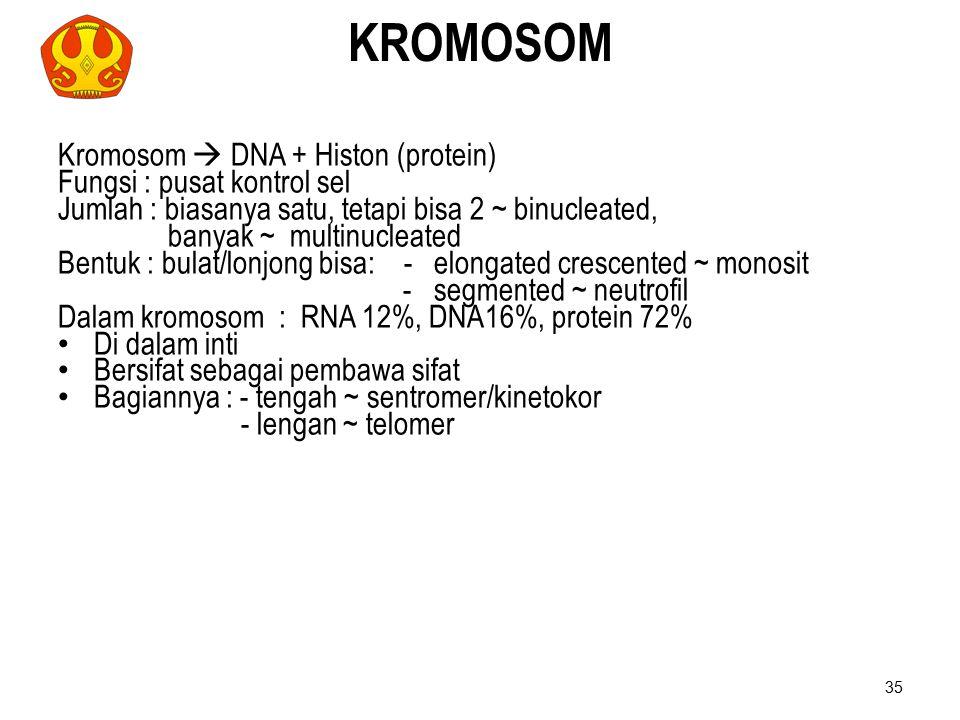 KROMOSOM Kromosom  DNA + Histon (protein) Fungsi : pusat kontrol sel Jumlah : biasanya satu, tetapi bisa 2 ~ binucleated, banyak ~ multinucleated Ben