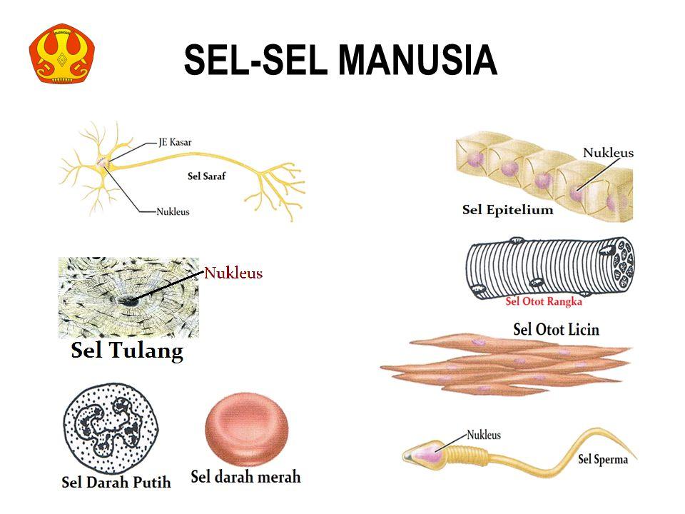 SEL-SEL MANUSIA 38