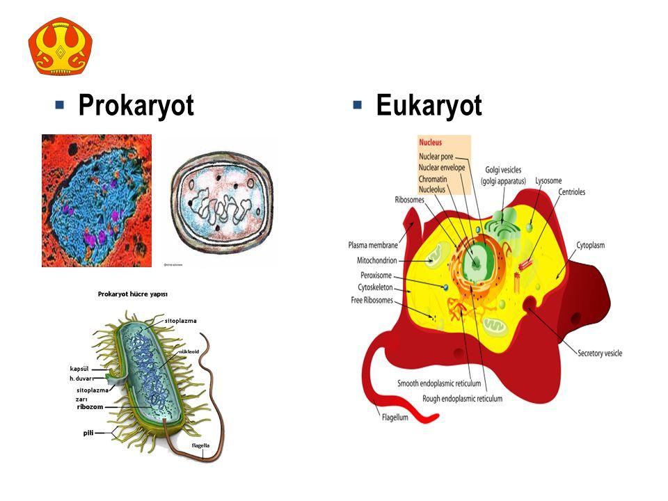  Prokaryot  Eukaryot 8