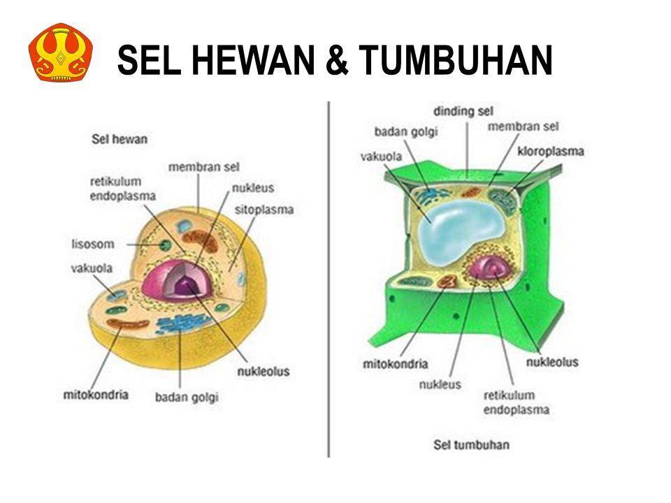SEL HEWAN & TUMBUHAN 9