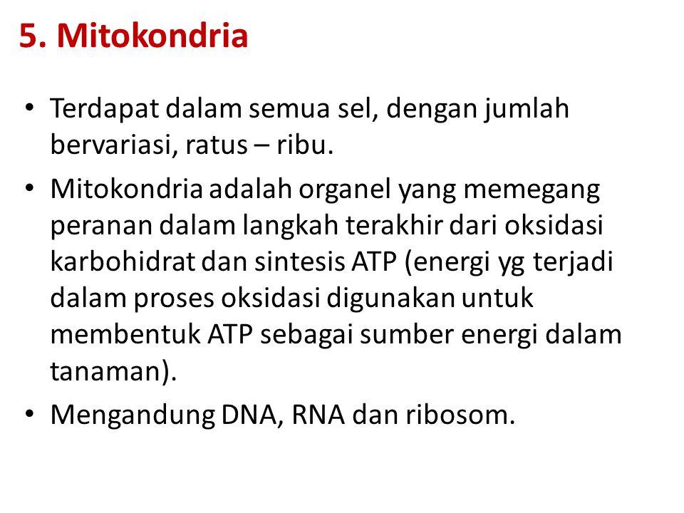 5.Mitokondria Terdapat dalam semua sel, dengan jumlah bervariasi, ratus – ribu.