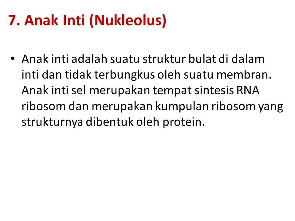 7. Anak Inti (Nukleolus) Anak inti adalah suatu struktur bulat di dalam inti dan tidak terbungkus oleh suatu membran. Anak inti sel merupakan tempat s