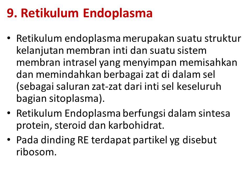9. Retikulum Endoplasma Retikulum endoplasma merupakan suatu struktur kelanjutan membran inti dan suatu sistem membran intrasel yang menyimpan memisah