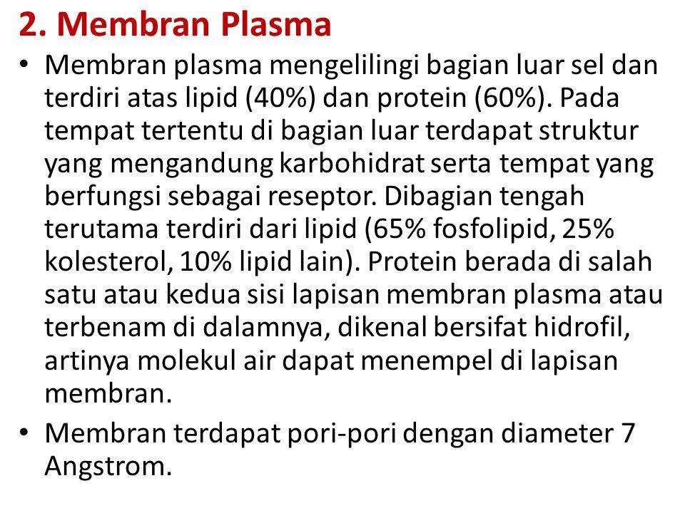 2. Membran Plasma Membran plasma mengelilingi bagian luar sel dan terdiri atas lipid (40%) dan protein (60%). Pada tempat tertentu di bagian luar terd