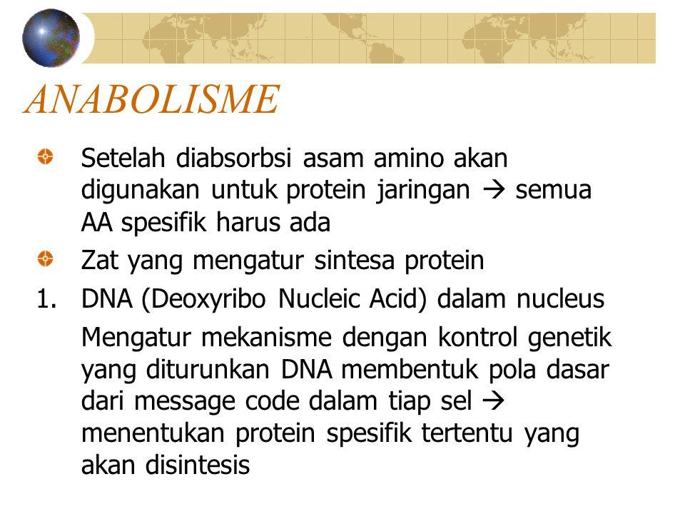 ANABOLISME Setelah diabsorbsi asam amino akan digunakan untuk protein jaringan  semua AA spesifik harus ada Zat yang mengatur sintesa protein 1.DNA (Deoxyribo Nucleic Acid) dalam nucleus Mengatur mekanisme dengan kontrol genetik yang diturunkan DNA membentuk pola dasar dari message code dalam tiap sel  menentukan protein spesifik tertentu yang akan disintesis