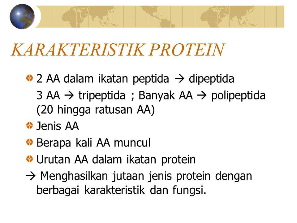 KARAKTERISTIK PROTEIN 2 AA dalam ikatan peptida  dipeptida 3 AA  tripeptida ; Banyak AA  polipeptida (20 hingga ratusan AA) Jenis AA Berapa kali AA muncul Urutan AA dalam ikatan protein  Menghasilkan jutaan jenis protein dengan berbagai karakteristik dan fungsi.