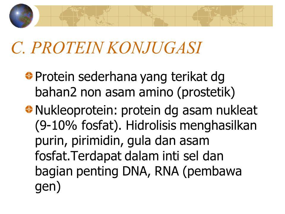 C. PROTEIN KONJUGASI Protein sederhana yang terikat dg bahan2 non asam amino (prostetik) Nukleoprotein: protein dg asam nukleat (9-10% fosfat). Hidrol