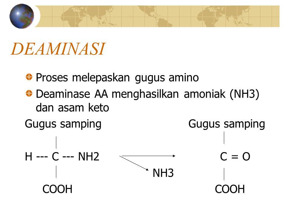 DEAMINASI Proses melepaskan gugus amino Deaminase AA menghasilkan amoniak (NH3) dan asam keto Gugus samping H --- C --- NH2 C = O NH3 COOH COOH